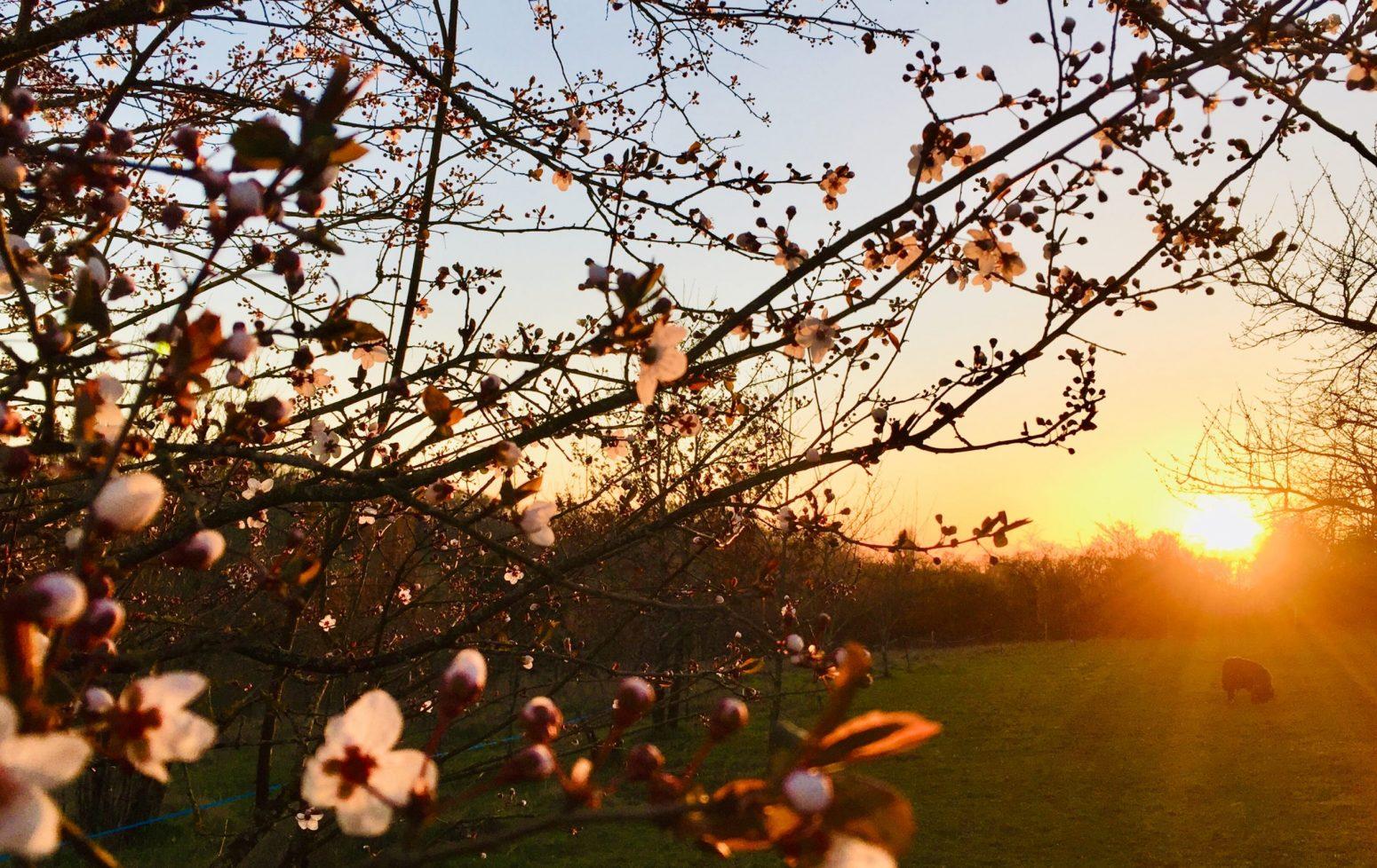 coucher de soleil en dordogne